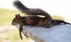 images ecureuil